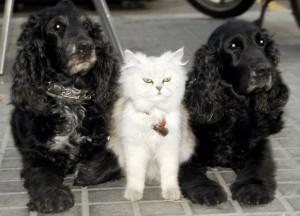 pompous_white_cat